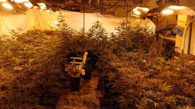cetiri-lica-iz-beograda-uhapsena-zbog-proizvodnje-marihuane-u-spaniji-2