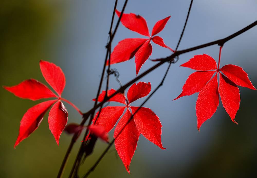 stigla-je-jesen