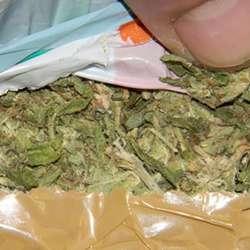 novi-pazar-uhapsen-mitrovcanin-zbog-marihuane