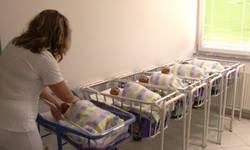 za-nepuna-dva-dana-u-pasjanu-rodene-cetiri-bebe