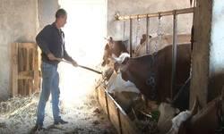 laplje-selo-samo-tri-domacinstva-gaje-stoku