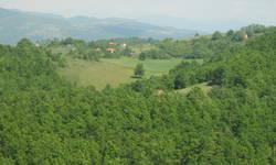 uhapsen-albanac-zbog-krade-sume-u-kursumlijskom-selu-dabinovac