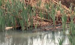reka-gracanka-ponovo-smrdi-iz-opstine-nemaju-vremena-ili-nisu-nadlezni