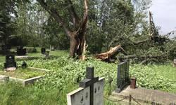 gorazdevac-bez-struje-jak-vetar-obarao-stabla