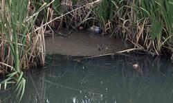 ombudsman-zatrazio-zastitu-reke-gracanke-od-zagadenja
