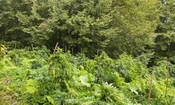policija-unistila-sest-plantaza-marihuane-u-regionu-kosara