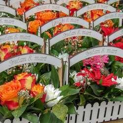 mitrovica-procvetala-na-dan-zena